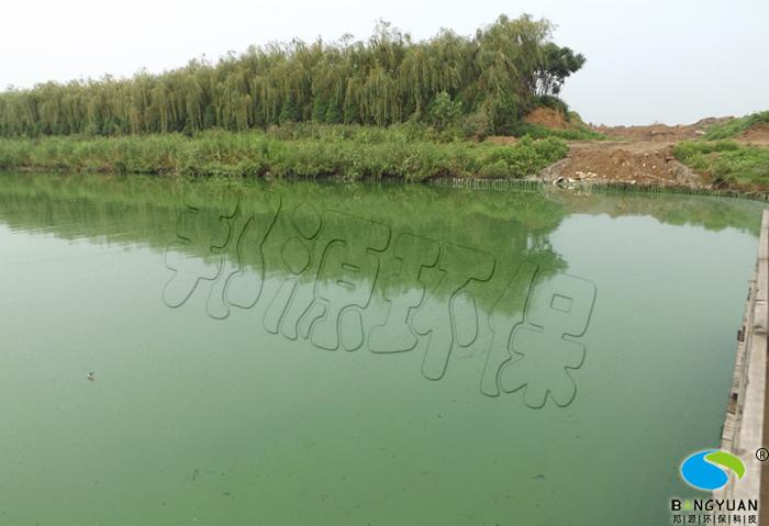 藍藻生物治理前