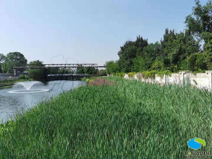 邦源环保人工湿地效果图