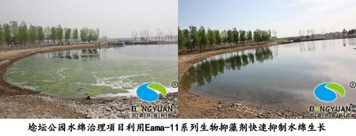 邦源环保富营养化水体治理应急产品Eama-11系列生物抑藻剂应用于水绵治理项目效果图