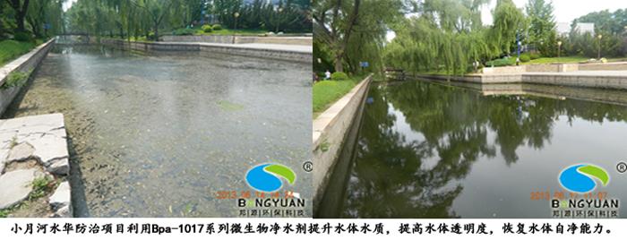 邦源环保水质提升产品Bpa-1017系列微生物净水剂应用于项目效果图