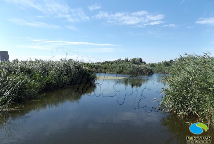 34.jpg 经过水体生物治理后,蓝藻消除,水体表观良好