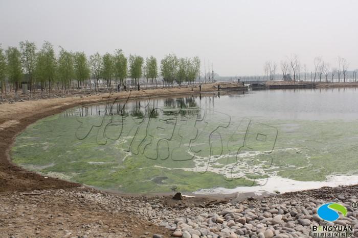 小湖区北部治理前水绵大面积爆发,影响景观效果