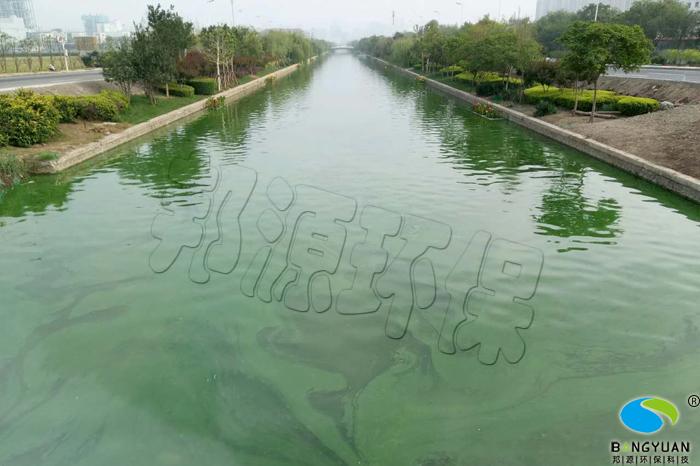 长泰河水体爆发蓝藻