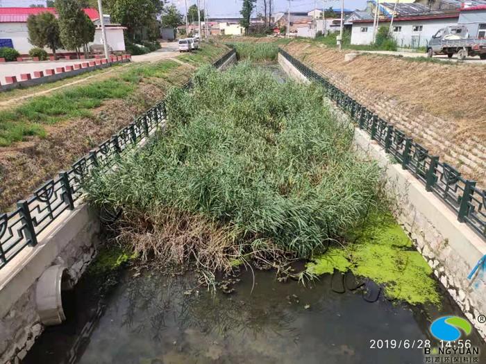 治理前,水體富營養化嚴重,水質差