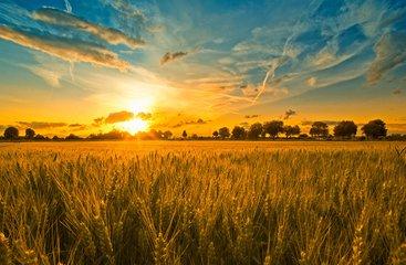 数字四方成功中标海东国家农业科技园区智慧农业生产管理与服务示范系统
